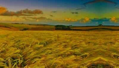 Аграрии зко ожидают хороший урожай после нескольких лет засухи