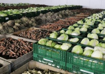 Атырауские аграрии заполняют на зиму овощехранилища