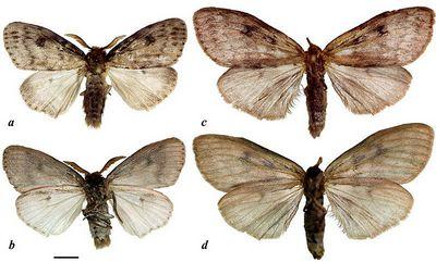 Бабочки с высшим образованием