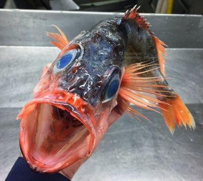 Царь-рыба из пробирки