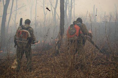 Чему учатся добровольцы на курсах лесных пожарных greenpeace