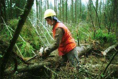 Дальневосточные заповедные леса пускают на паркет, заявляет wwf