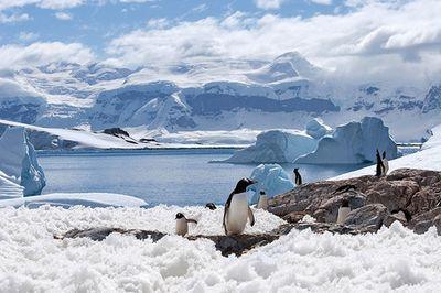 Депутат сидякин поведал о подробностях скандального вояжа в антарктиду