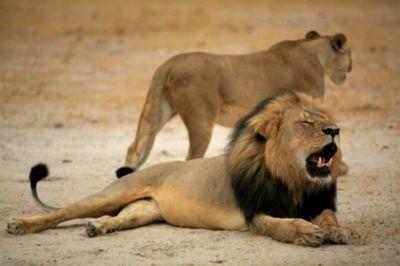 Из-за засухи власти зимбабве продают диких животных