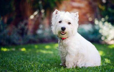 К чему снится белая собака? основные толкования: к чему снится белая собака, добрая или злая, большая или маленькая
