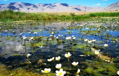 К чему снится болото: ходить по болоту, увязнуть в нём. основные толкования: хорошо или плохо, если приснилось болото