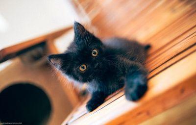 К чему снится чёрный котёнок? основные толкования - к чему снится чёрный котёнок: будьте бдительны!