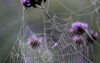 К чему снится паутина: в доме, на улице, запутаться в паутине? основные толкования разные сонников - к чему снится паутина