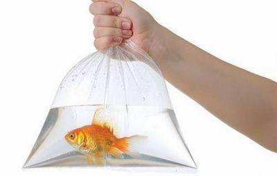 К чему снится рыба мужчине: живая или жареная? основные толкования разных сонников - к чему снится рыба мужчине
