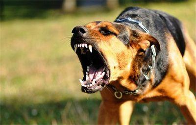 К чему снится злая собака: что говорят популярные сонники. чего ожидать, если снится злая собака