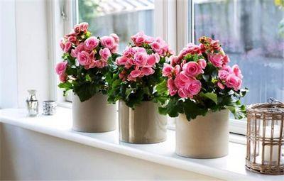 К чему снятся цветы в горшках – это хороший знак! основные толкования: к чему снятся цветы в горшках