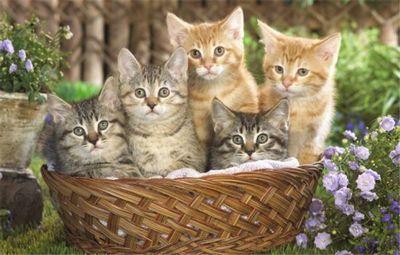 К чему снятся котята: родившиеся на ваших глазах, маленькие, слепые котята? основное толкование - к чему снится много котят