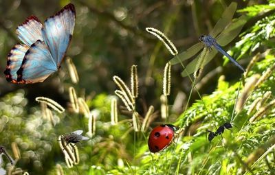 К чему снятся насекомые: красивые или кусающие во сне? основные толкования разных сонников к чему снятся насекомые?