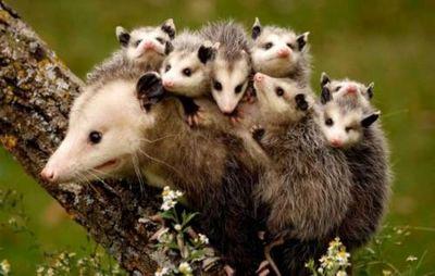 К чему снятся животные: агрессивные или ласковые? основные толкования разных сонников - к чему снятся животные
