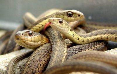 К чему снятся змеи мужчине: змея напала и укусила во сне, свернулась в клубок. основные толкования - к чему снятся змеи мужчине?