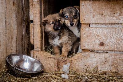 Как выживают приюты для животных на сахалине?