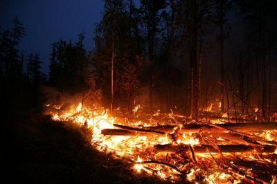 Как жгут лесные чиновники