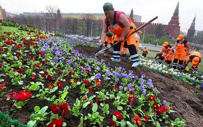 Какие цели преследует проект мэрии москвы «активный гражданин»