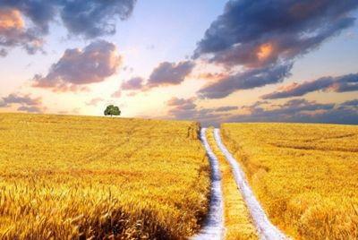 Казахстан может стать одной из ведущих сельскохозяйственных держав