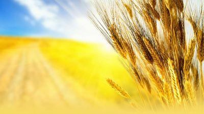 Корейские научные технологии внедрят в сферу сельского хозяйства казахстана