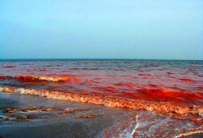 Красный прилив стал причиной экологического кризиса в чили