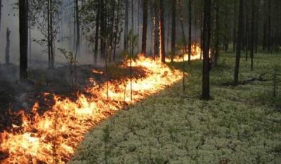 Лесные пожары и спутник