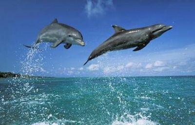 Море голосов. как в крыму пытаются спасти жизни дельфинов