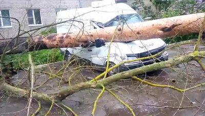 Московские ураганы: кто виноват? что делать? - «общество»