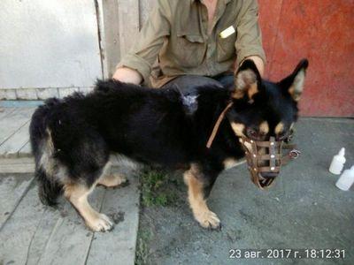 На знаменитом уральском заводе жестоко убили пса — любимца рабочих - «общество»