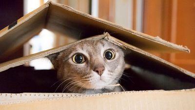 Обязательная регистрация домашних животных может обойтись в 2,6 млрд руб.