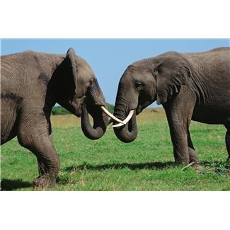 От владельца кита до директора слона