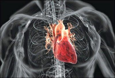 Почему наше сердце под прицелом?
