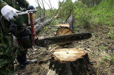 Пока лесные инспекторы замеряют незаконные рубки в лесах, экологи пытаются сохранить деревья, ведя переговоры с заготовщиками