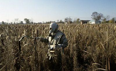 После чернобыля села вымерли - «наука»