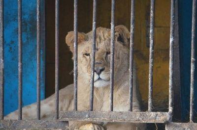 Прокуратура и минсельхоз не нашли жестокости в зоолунапарке «барс» в сатке - «новости челябинска»