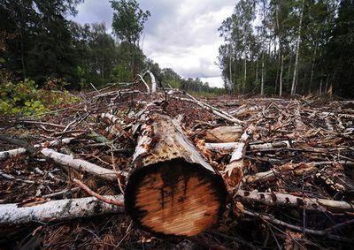 Рейтинг качества госуправления лесами от wwf выявил лучшие и худшие регионы