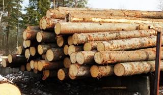 Россиянам могут разрешить бесплатно собирать валежник в лесу