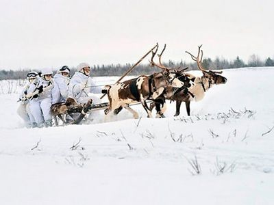 Российских арктических стрелков научили управлять оленьими и собачьими упряжками - «общество»