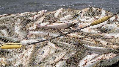 Рыбу народам! будущее стране!