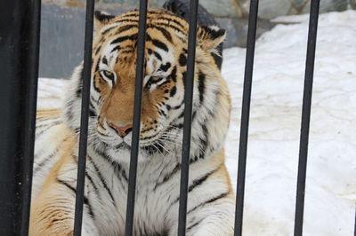 Сахалинский зоопарк переходит на летний режим работы