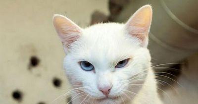 Самый популярный в российских сми кот живет в эрмитаже