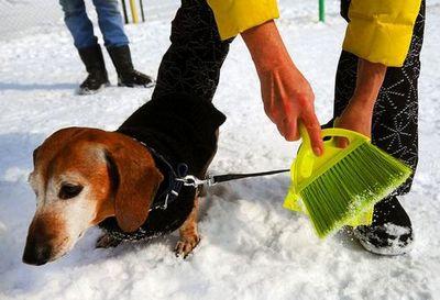 Тюменцы скептически отнеслись к идее общественных туалетов для собак