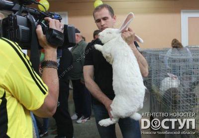 «Ушастая» выставка-ярмарка открылась в челябинском дк чтз - «новости челябинска»