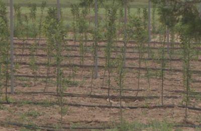 В южном казахстане на 17 га бесхозной земли разбили фруктовый сад