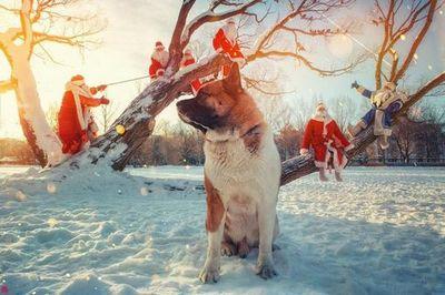 В новый год со сказкой: как готовятся к празднику ёжик в тумане, дед мороз и женя лукашин