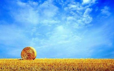 В павлодарских хозяйствах сенокос начался с опозданием