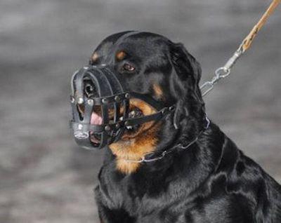 В россии начнут регистрацию домашних собак