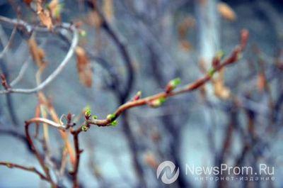 """Весна в тюмени: топ """"настоящих"""" признаков весны"""
