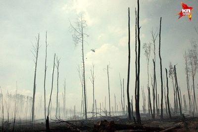 За огнем не видно леса