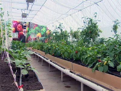 Жители акмолинской области переходят на здоровое питание